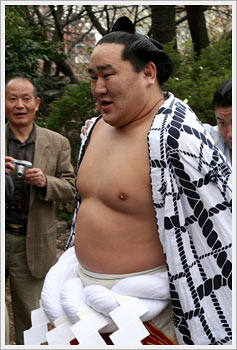Yokozuna Asashoryu, in a relaxed mood, April 7, 2006: click for gallery